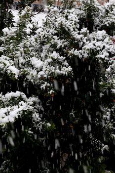 2016.11積雪1.jpg