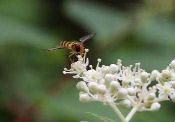 2016.8庭の虫たち2.jpg