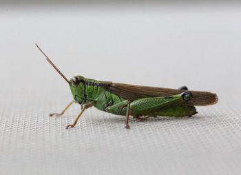 2016.8庭の虫たち4.jpg