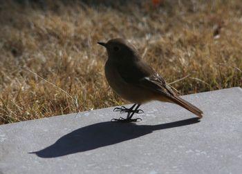 2017.2野鳥3.jpg
