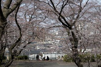 2017.4桜1.jpg