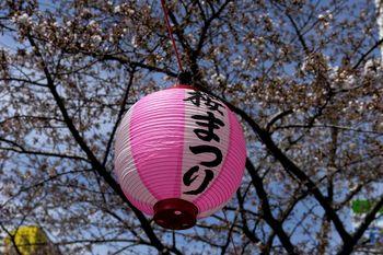 2017.4桜3.jpg