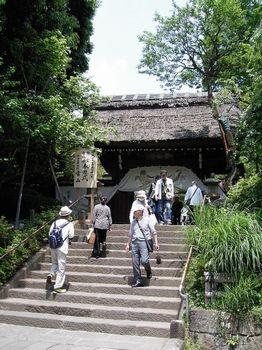 2017.5神代植物園16.jpg