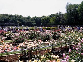 2017.5神代植物園6.jpg