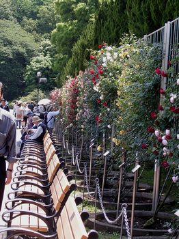 2017.5神代植物園7.jpg