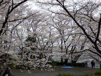2019.3庭の花12.jpg