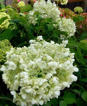 2019.6庭の花1.jpg